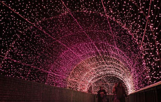 春に誘う40メートルの「桜のトンネル」写真